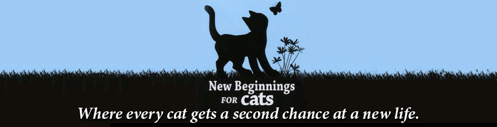 New Beginnings for Cats Shelter